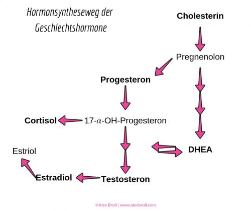 Testosteron für die Wechseljahre